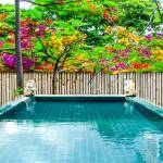 Spa Onsen Swimming Pool Flower Colorful And Bamboo Fence Background Stock Photo Picture And Royalty Free Image Image 61010000