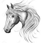 Black White Horse Head Sketch Vector Royalty Free Cliparts Vectors And Stock Illustration Image 141133531