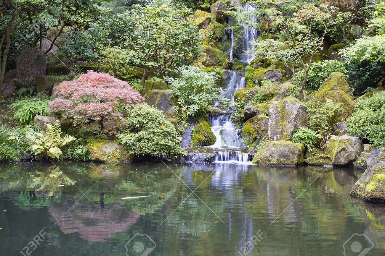 Japanese Garden Koi Pond With Waterfall Maple Trees And Rocks Stock Photo Picture And Royalty Free Image Image 14977752