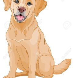 illustration of cute golden retriever dog stock vector 46230245 [ 928 x 1300 Pixel ]