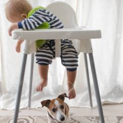 Dog High Chair Kitchen Table Cushions Cute Boy And Under Stock Photo Picture Royalty 87987497