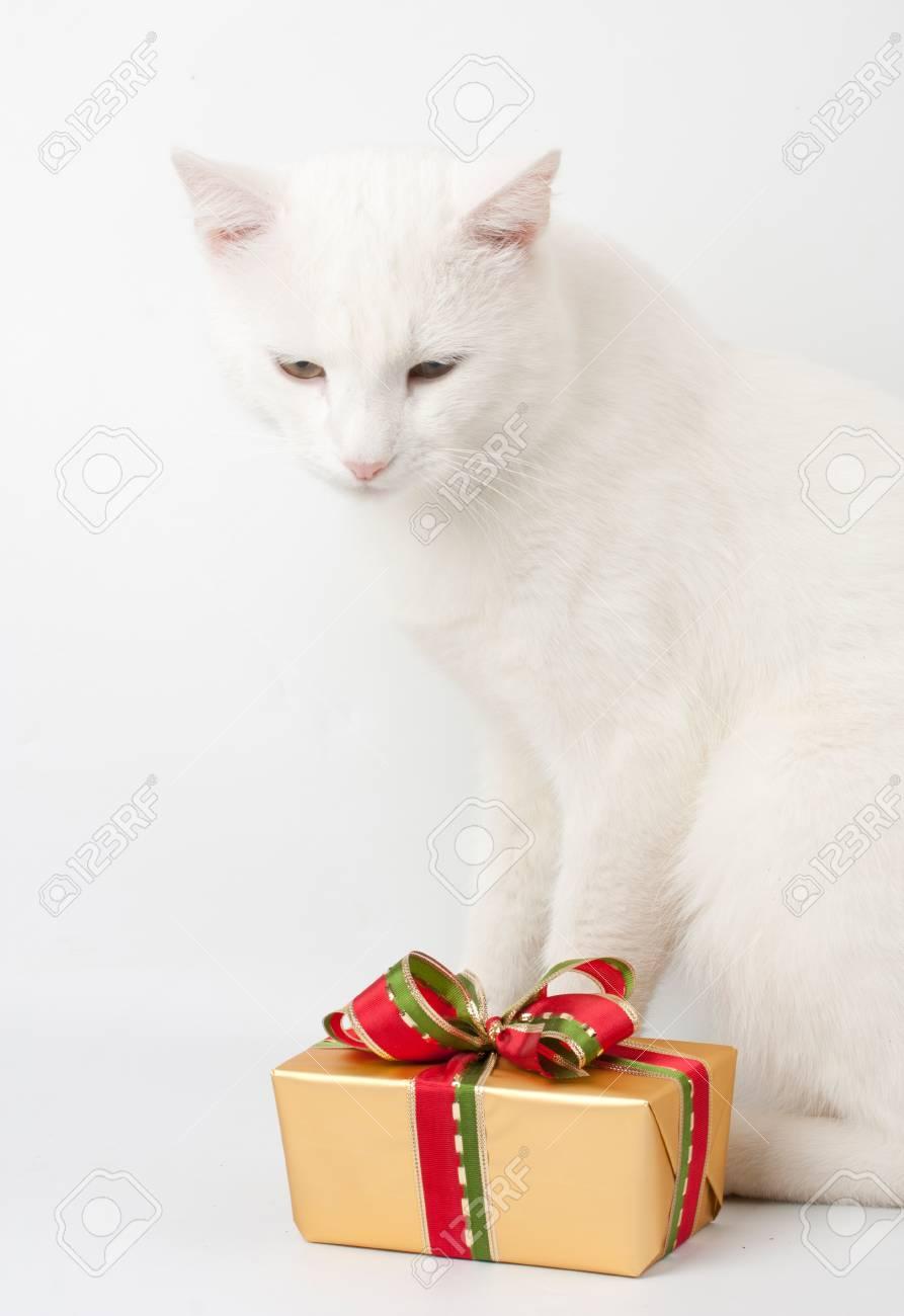 Christmas Cat Background : christmas, background, Christmas, Background, Stock, Photo,, Picture, Royalty, Image., Image, 12692955.