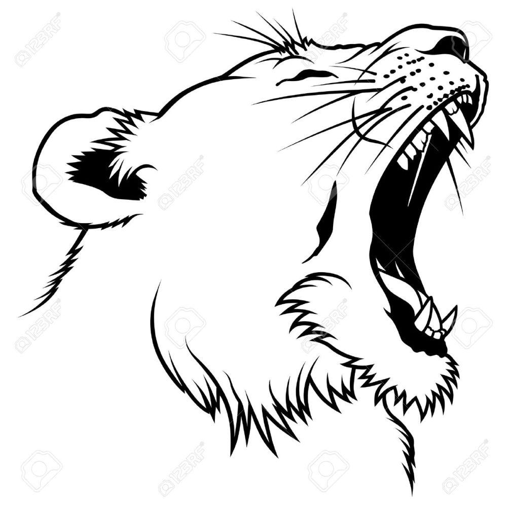medium resolution of lioness head hand drawn illustration stock vector 6561512
