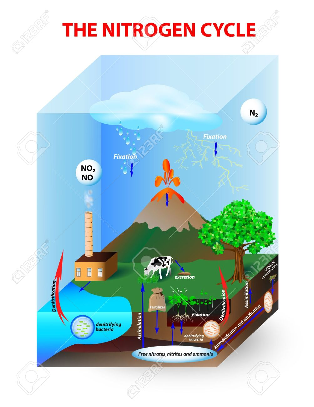hight resolution of diagram nitrogen cycle process by which nitrogen is converted between its various chemical forms this transformation