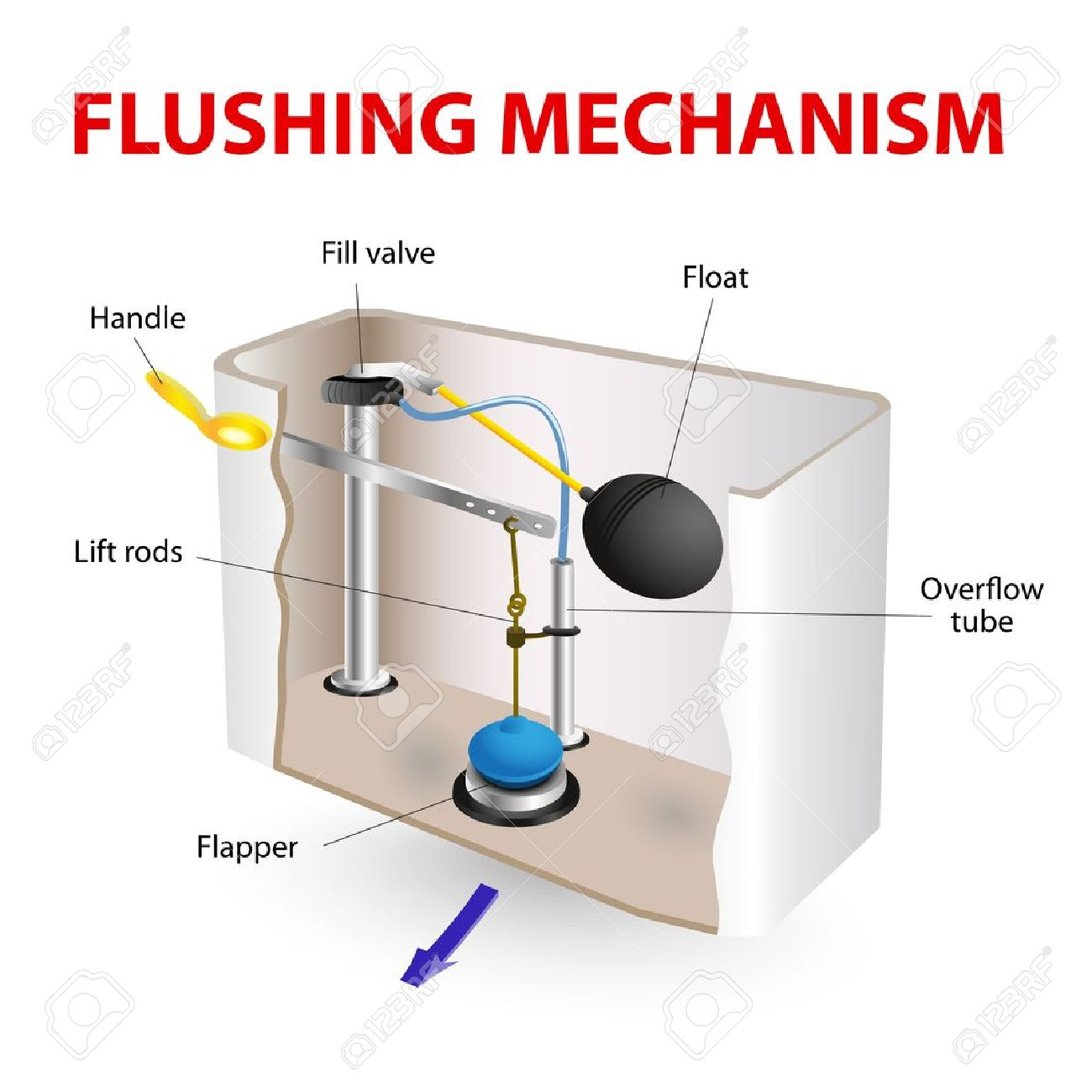 hight resolution of flush toilet flushing mechanism vector diagram stock vector 21930695