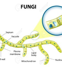 typical fungi cell fungal hyphae structure fungi diagram illustrating the ultrastructure of a [ 1300 x 941 Pixel ]