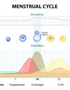 Menstrual cycle increase and decrease of the hormones graph also depicts growth rh rf