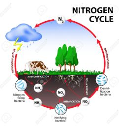 nitrogen cycle the processes of the nitrogen cycle transform nitrogen from one form to another [ 1300 x 1300 Pixel ]