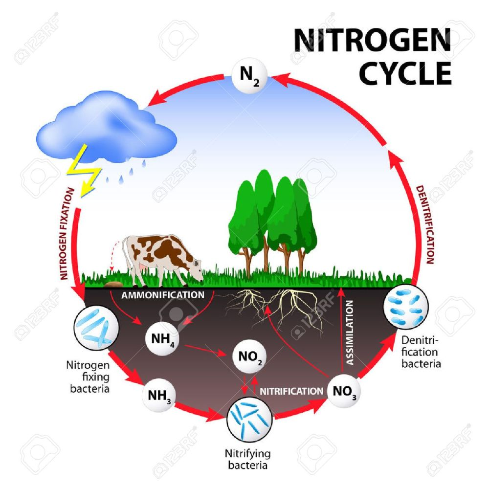 medium resolution of nitrogen cycle the processes of the nitrogen cycle transform nitrogen from one form to another