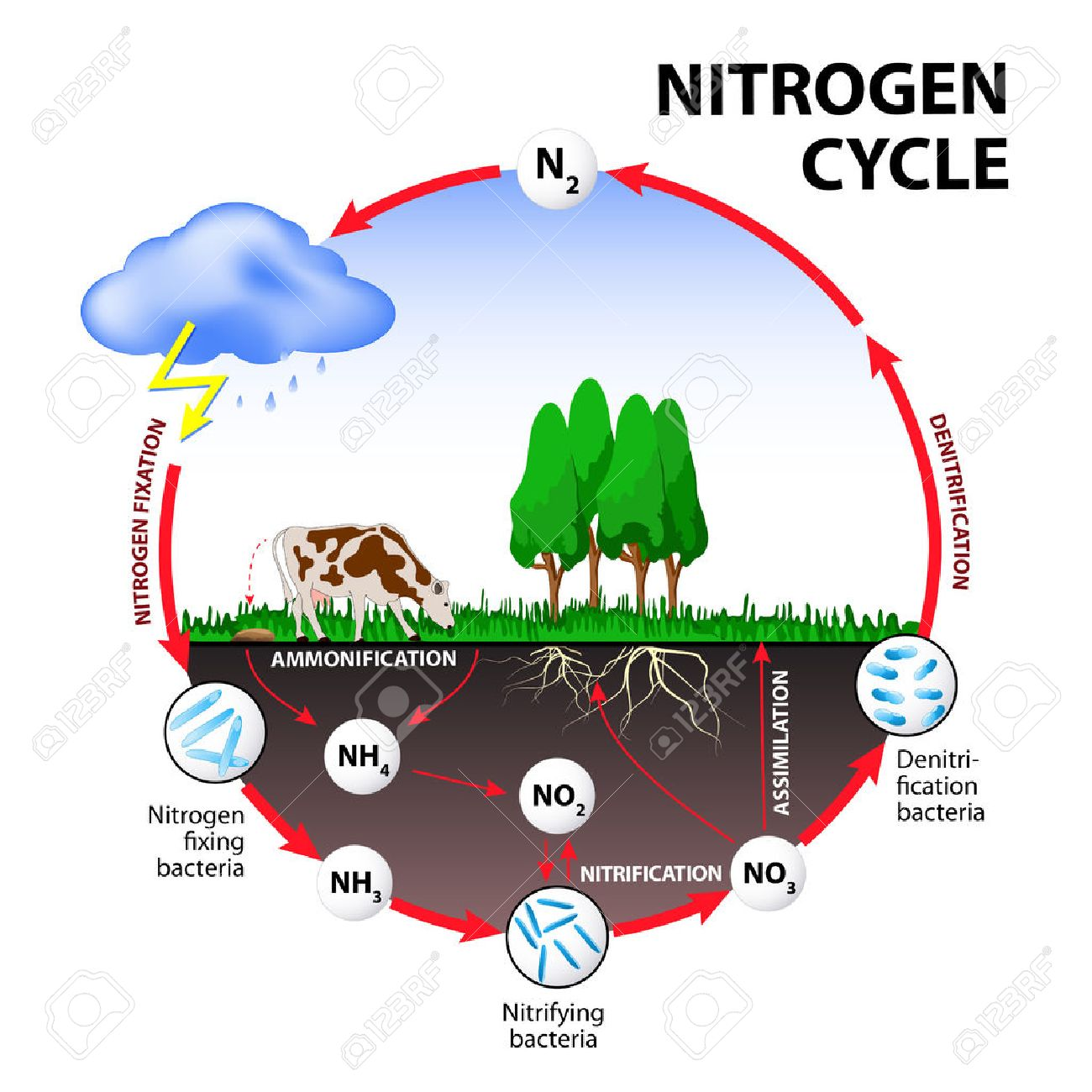 hight resolution of nitrogen cycle the processes of the nitrogen cycle transform nitrogen from one form to another
