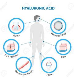 hyaluronic acid in the human body stock vector 69252664 [ 1300 x 1300 Pixel ]