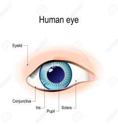 anatomy of the human eye in front external view schematic diagram detailed illustration stock vector [ 1300 x 1300 Pixel ]