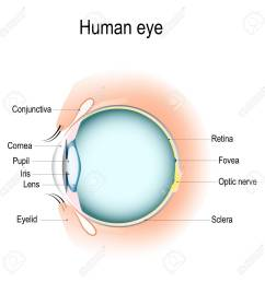 anatomy of the human eye vertical section of the eye and eyelids eye anatomy diagram eyelid [ 1300 x 1300 Pixel ]