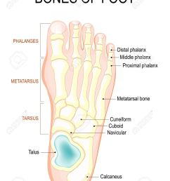 bones of foot human anatomy the diagram shows the placement foot structure  diagram pain bones of