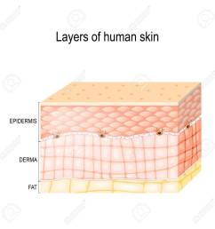 epidermis horny layer and granular layer dermis connective [ 1300 x 1300 Pixel ]