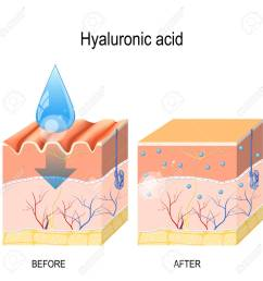 hyaluronic acid skin care products skin rejuvenation with help of hyaluronic acid stock [ 1300 x 1300 Pixel ]