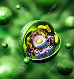 animal cell anatomy on green background 3d illustration stock illustration 66313216 [ 1300 x 974 Pixel ]