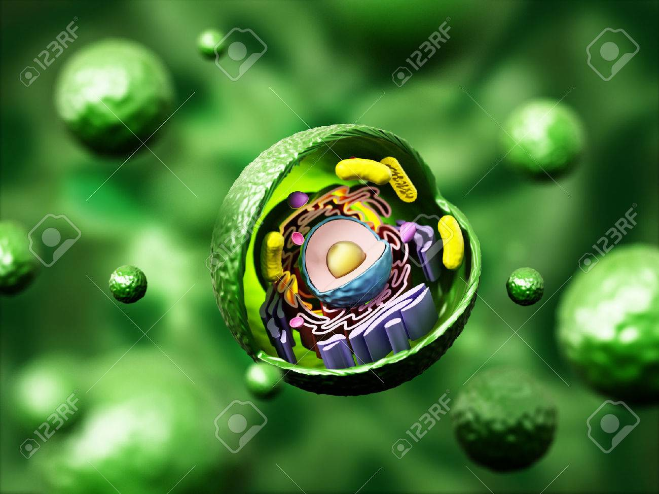 hight resolution of animal cell anatomy on green background 3d illustration stock illustration 66313216