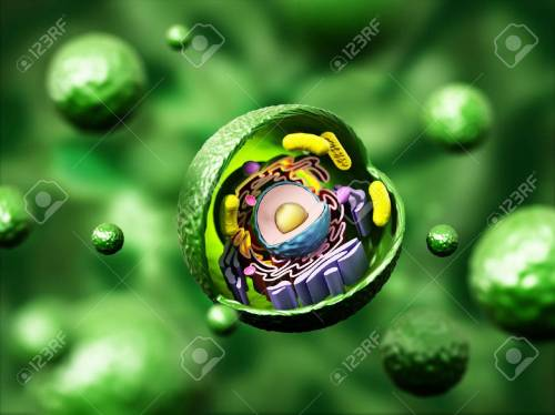 small resolution of animal cell anatomy on green background 3d illustration stock illustration 66313216