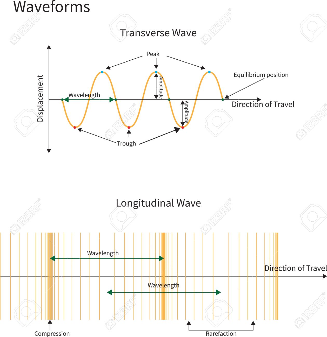 hight resolution of diagram showing transverse and longitudinal wave forms stock vector 17736520