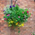 Colorful Hanging Basket Of Summer Plants Attached To A Brick Stock Photo Picture And Royalty Free Image Image 38865361