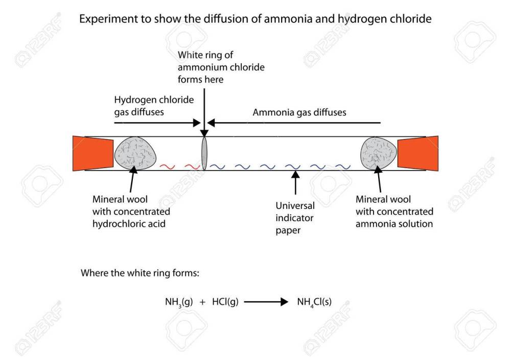medium resolution of labelled diagram to show the diffusion of ammonia and hydrogen chloride stock vector 66837635