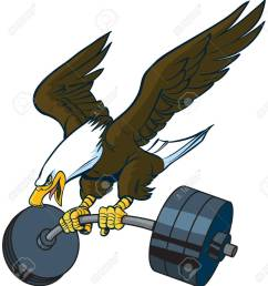 vector vector cartoon clip art illustration of a bald eagle mascot diving or swooping down with spread wings and a barbell weight in its talons  [ 1190 x 1300 Pixel ]