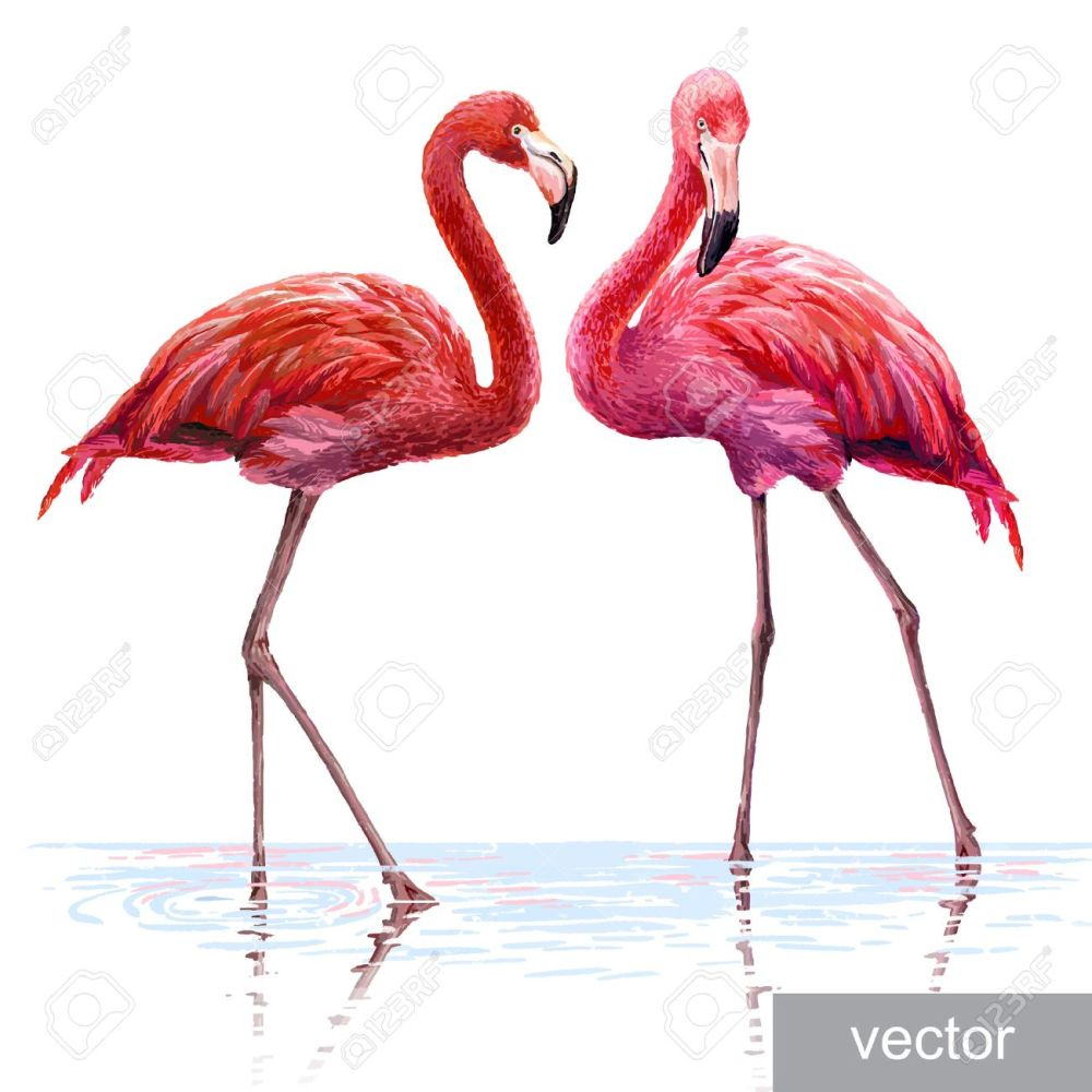medium resolution of colorful pink vector flamingo realistic illustration blue lagoon