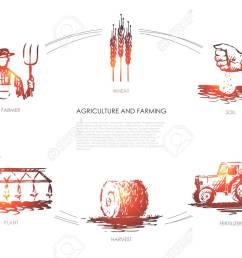 agriculture and farming farmer soil wheat plant harvest fertilizer vector [ 1300 x 866 Pixel ]