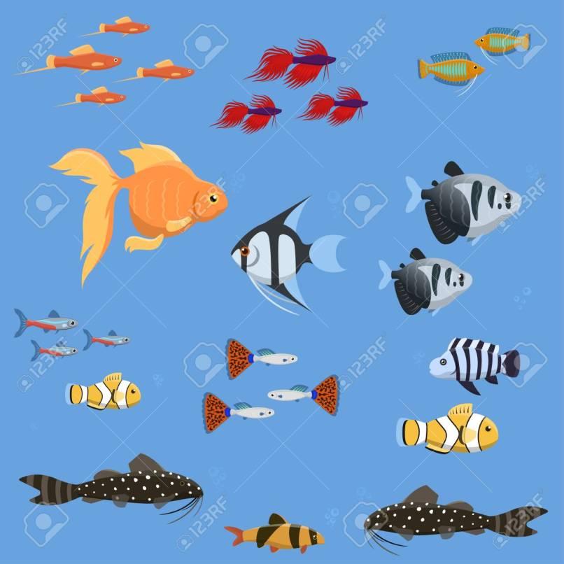 Freshwater Aquarium Fish Types The Best 2018