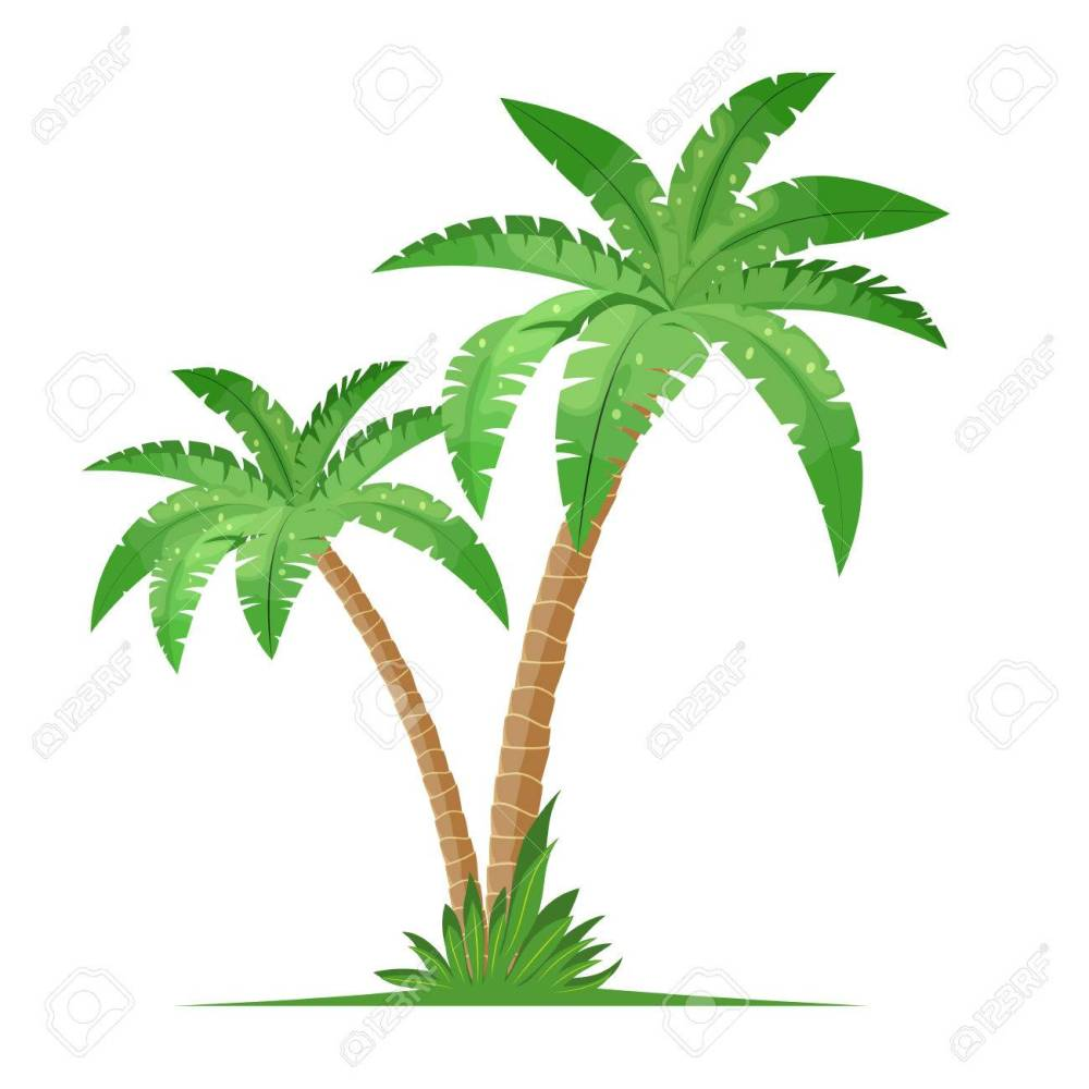 medium resolution of tropical palm trees isolated on white background coconut trees vector illustration in flat style