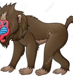 foto de archivo ilustraci n vectorial de mandrill baboon de dibujos animados [ 1300 x 1090 Pixel ]