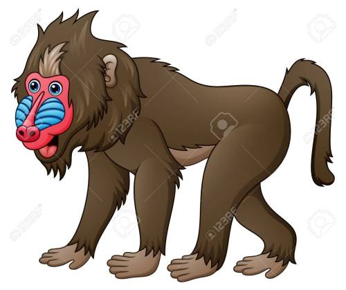 small resolution of foto de archivo ilustraci n vectorial de mandrill baboon de dibujos animados