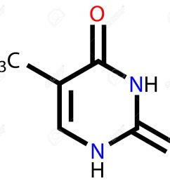 nucleobase thymine structural formula stock vector 13411807 [ 1300 x 1111 Pixel ]