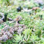Miniature Succulent Plants Decorate In The Garden Various Types Stock Photo Picture And Royalty Free Image Image 135183406