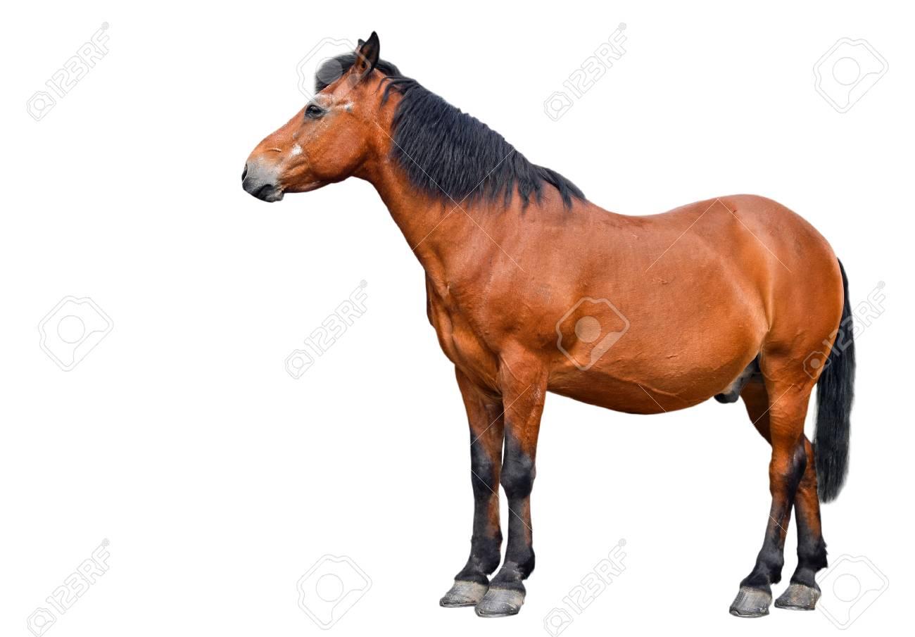 caballo aislado en el