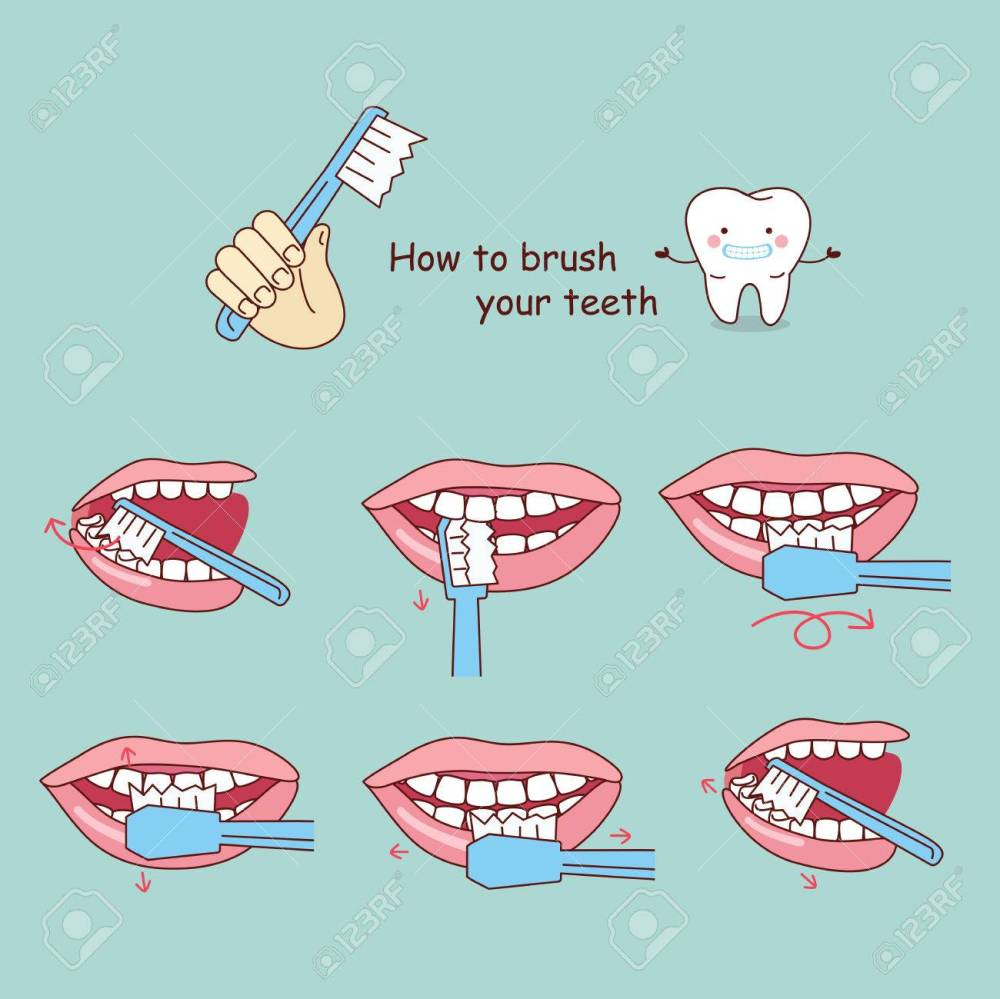 medium resolution of how to brush your teeth great for your design stock vector 70274969