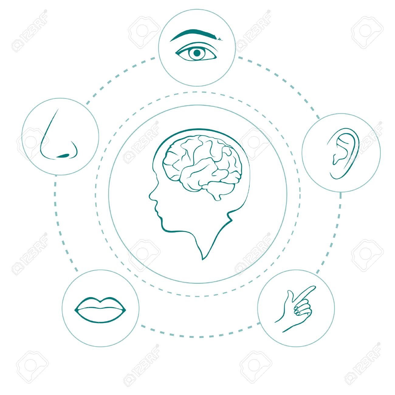 five senses diagram volvo wiring fh vector icons human nose ear eye and mouth illustration