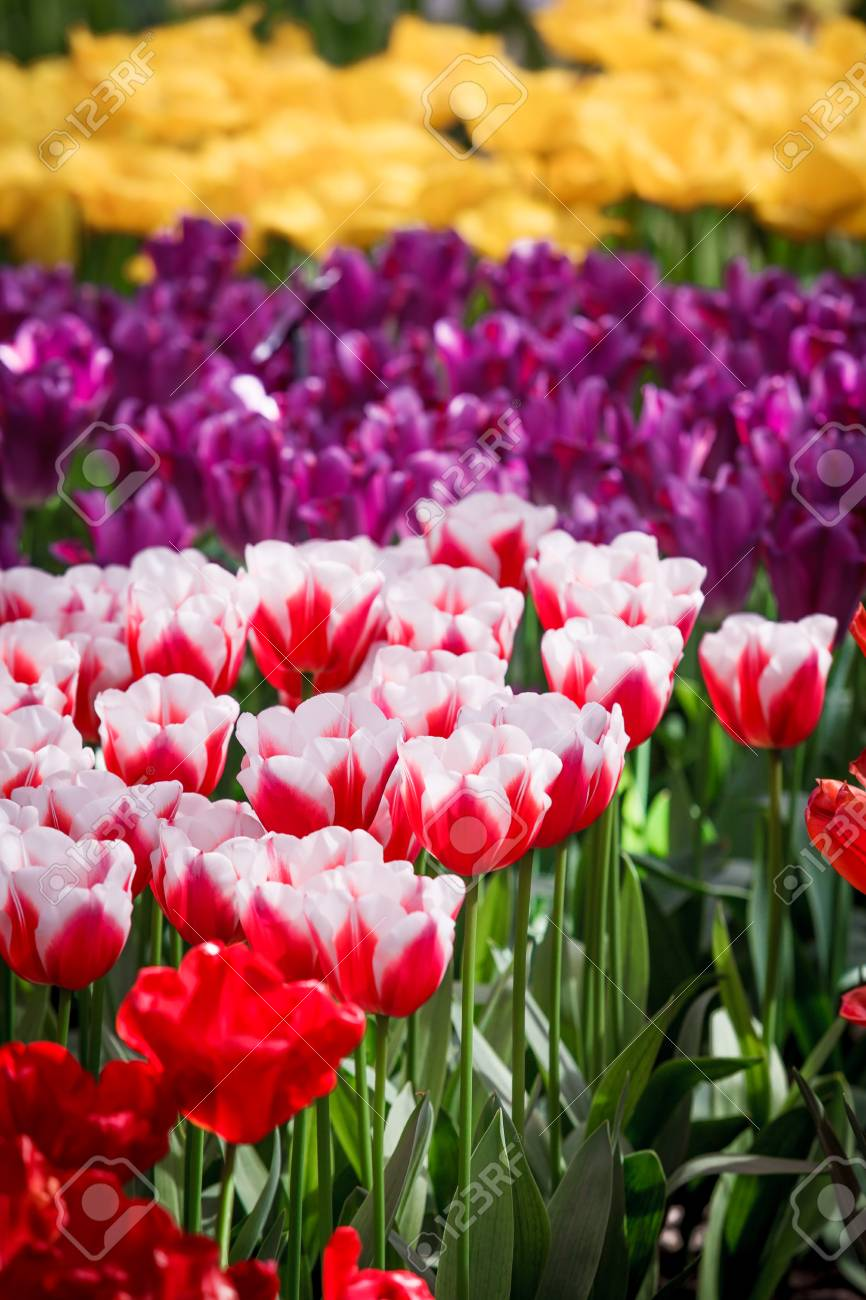 Flowers Background Beautiful Garden Flowers Stock Photo Picture And Royalty Free Image Image 69134902