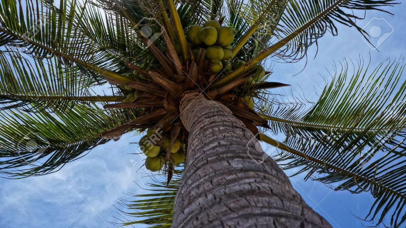 coconut palm tree trunk