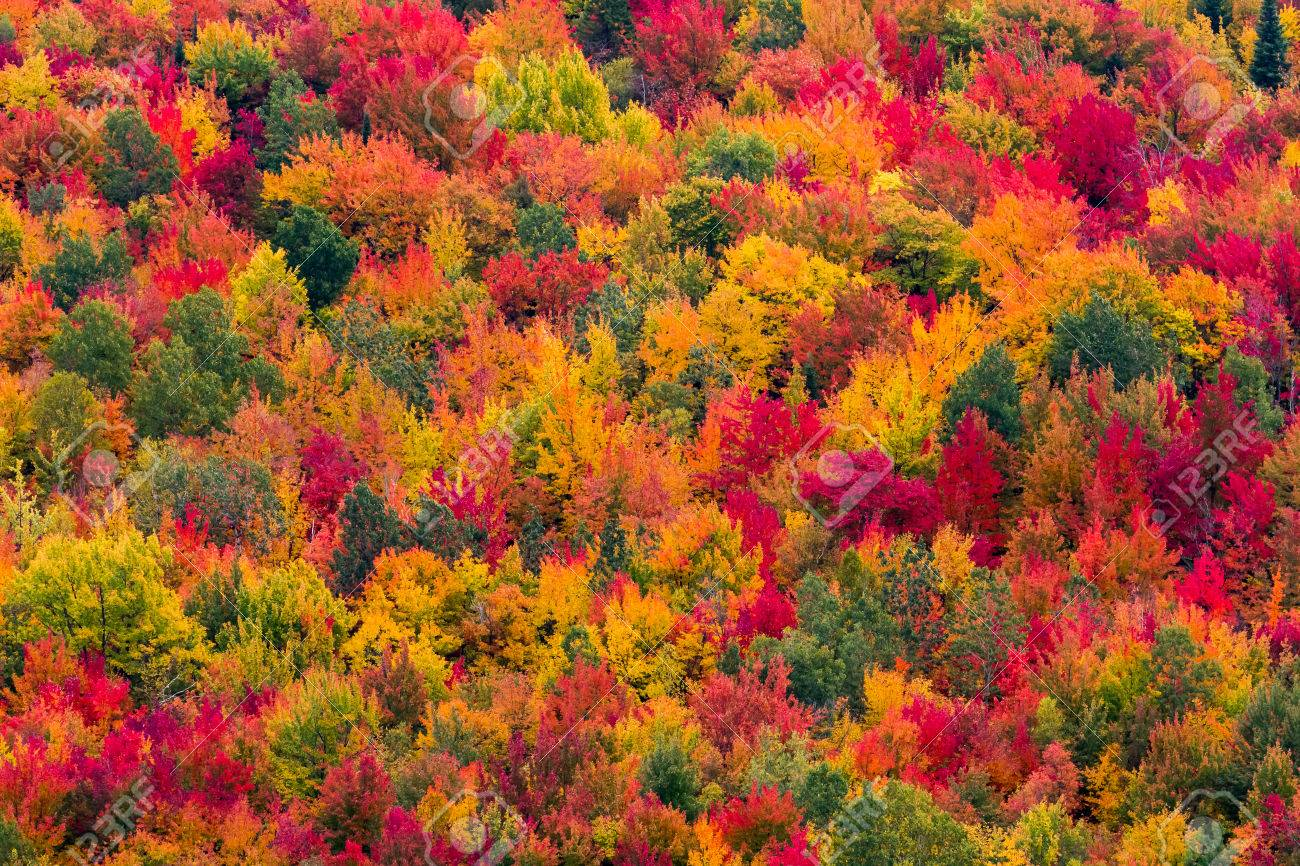 We value the renewable products and benefits. Colorful Aerial View Of A North American Forest At Fall Stock Photo Picture And Royalty Free Image Image 67118014