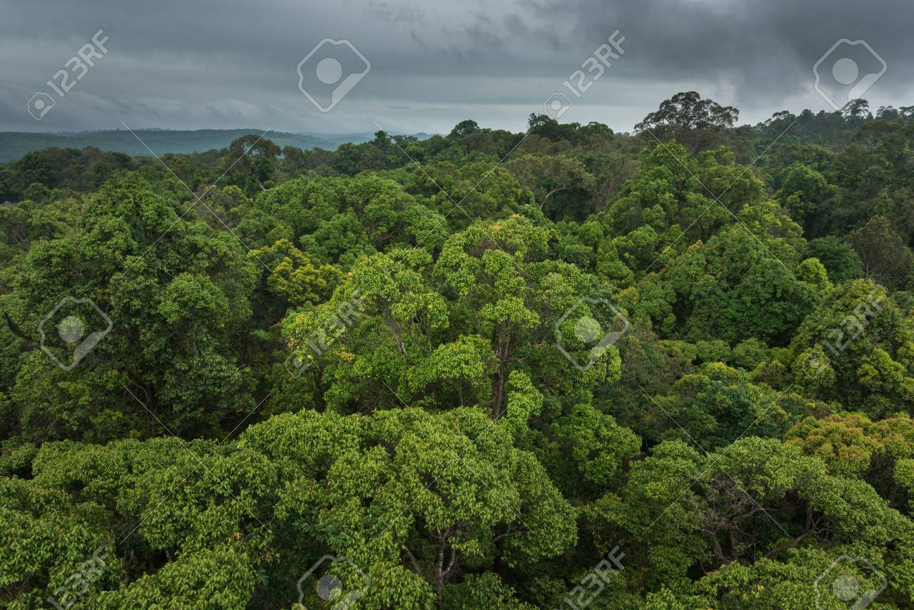 Measuring 60 x 7.5 m (after ashon, 1982). Landscape View Of Dry Tropical Evergreen Forest Thailand Stock Photo Picture And Royalty Free Image Image 81410651