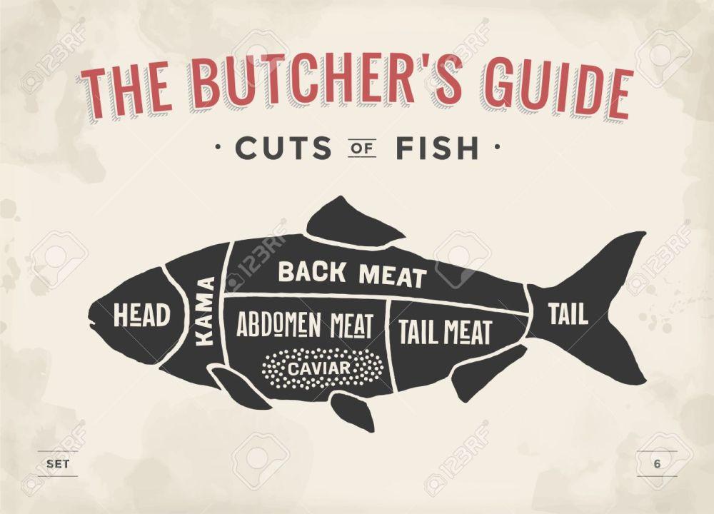 medium resolution of poster butcher diagram and scheme fish vintage typographic hand