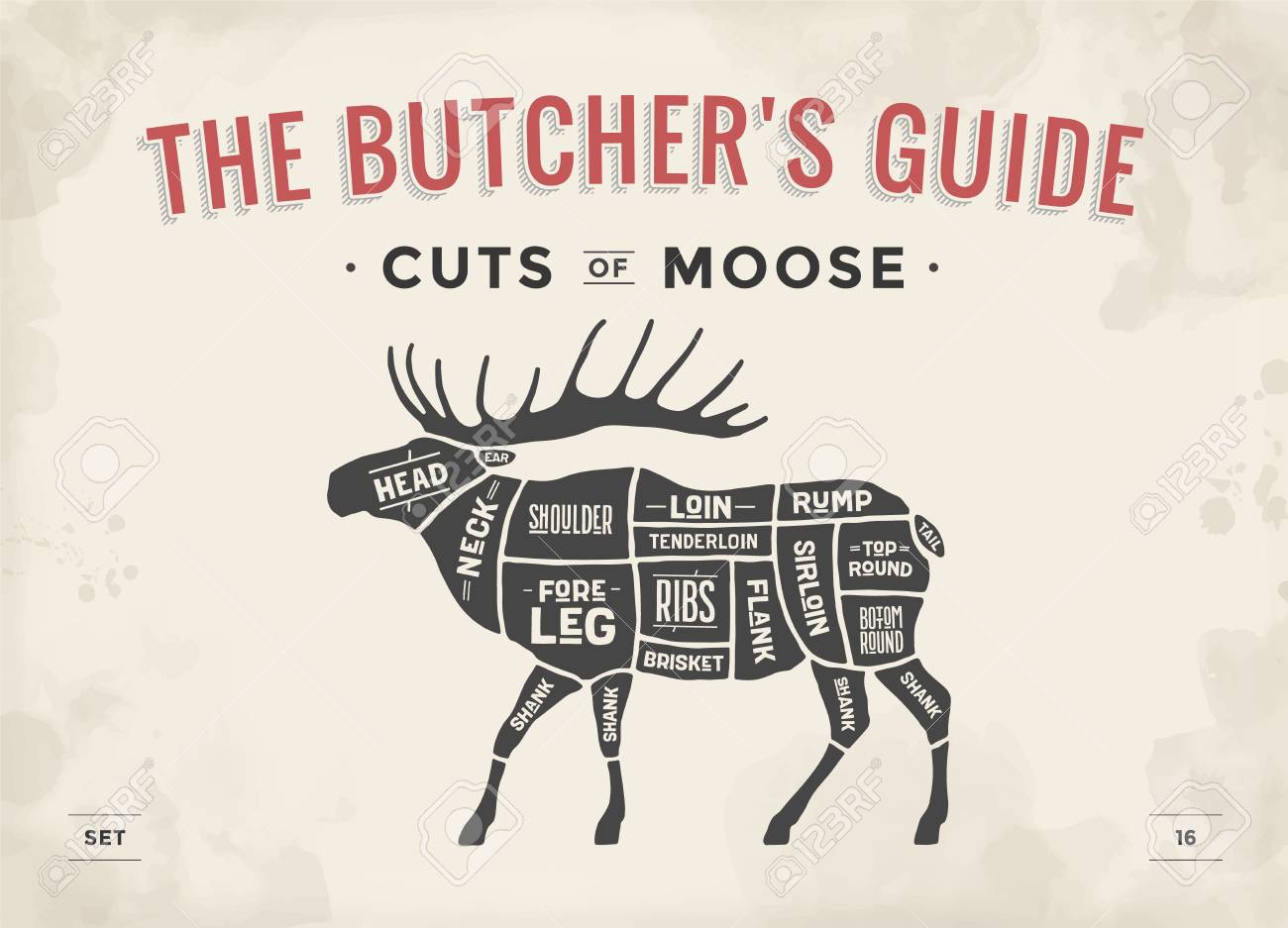 vintage diagram electrical wiring software free cut of meat set poster butcher scheme moose typographic hand
