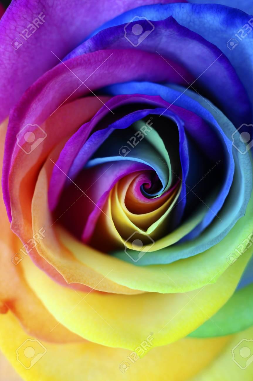 Rose Arc En Ciel : Macro, Rainbow, Heart, Flower, Multi, Colored, Petals, Stock, Photo,, Picture, Royalty, Image., Image, 89500047.