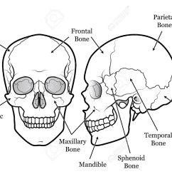 human skull chart royalty free cliparts vectors and stock diagram of skull muscles diagram of a skull [ 1300 x 1027 Pixel ]