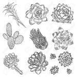 Cute Cactus Illustrations Handmade Set Hand Drawn Outline Cacti Royalty Free Cliparts Vectors And Stock Illustration Image 111553030