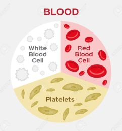 composition of blood diagram red and white blood cell vector anatomy stock vector [ 1300 x 1257 Pixel ]