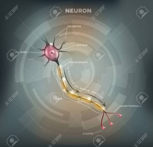 small resolution of labeled diagram of the neuron nerve cell that is the main part of the nervous