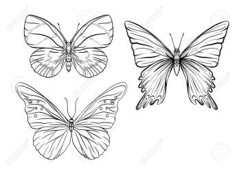 Set Of Outline Images Of A Butterfly Outline Drawing Stock Royalty Free Cliparts Vectors And Stock Illustration Image 106868711